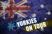 Yorkies On Tour Weekend Round-Up